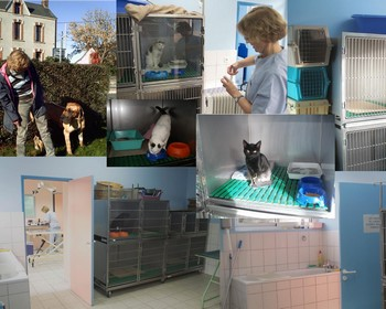Hospitalisation Clinique V T Rinaire De La Fontaine
